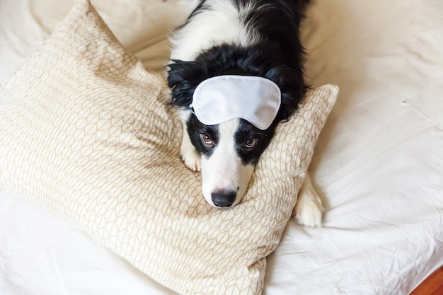 Filhote de cachorro engraçado border collie com máscara para dormir, colocar no cobertor de travesseiro na cama