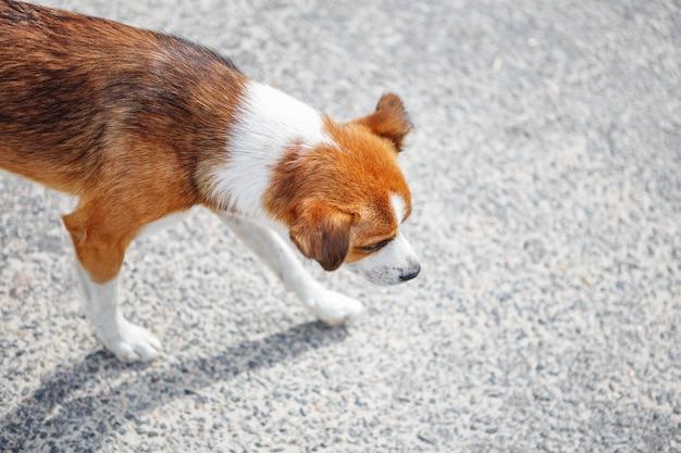 Filhote de cachorro faminto sem-teto infeliz andando sozinho na rua