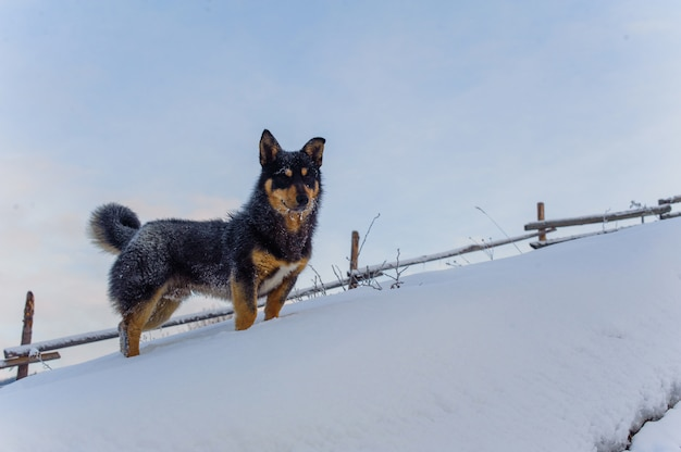 Filhote de cachorro feliz no inverno