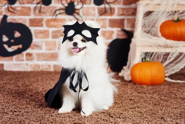 Filhote de cachorro fofo com capa preta e máscara