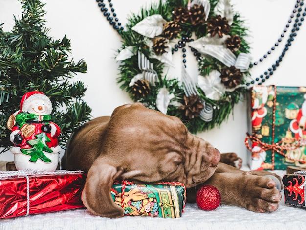 Filhote de cachorro jovem e charmoso com decoração de natal