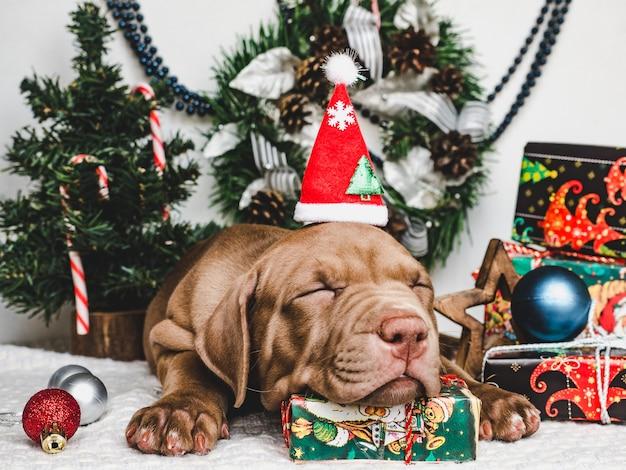 Filhote de cachorro jovem e charmoso e uma caixa festiva