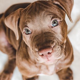 Filhote de cachorro jovem e encantador. cuidado animal