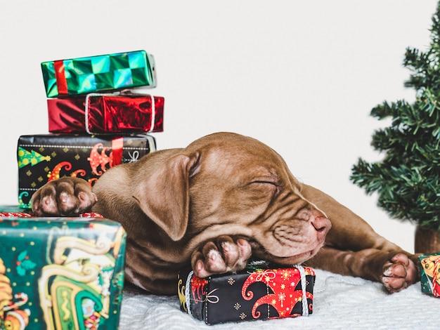 Filhote de cachorro jovem e encantador e uma caixa festiva
