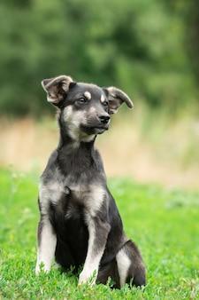 Filhote de cachorro na grama