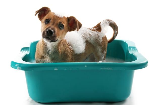 Filhote de cachorro no banho isolado no branco