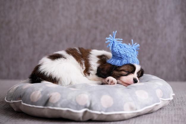 Filhote de cachorro papillon de raça pequena dormindo docemente no travesseiro