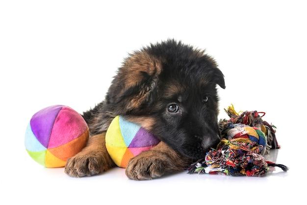 Filhote de cachorro pastor alemão isolado no branco