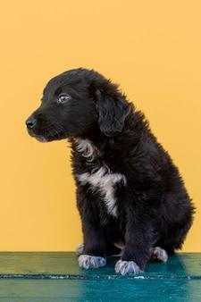 Filhote de cachorro pequeno, olhando para longe