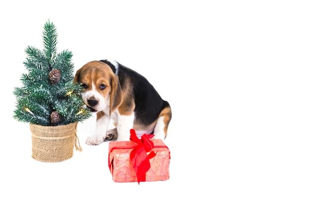 Filhote de cachorro perto de uma árvore de natal com um presente
