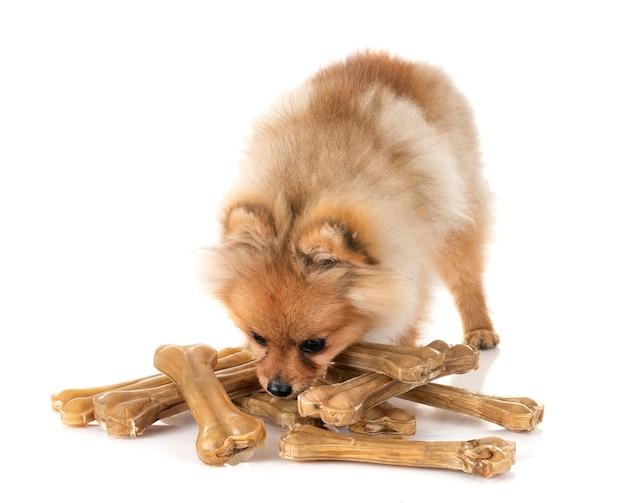 Filhote de cachorro pomeranian e ossos