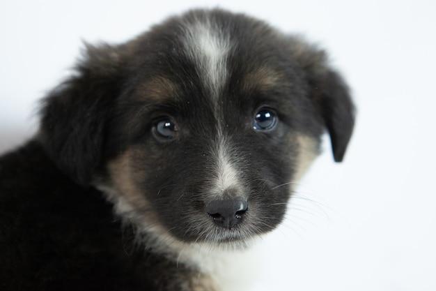 Filhote de cachorro preto e branco bonito