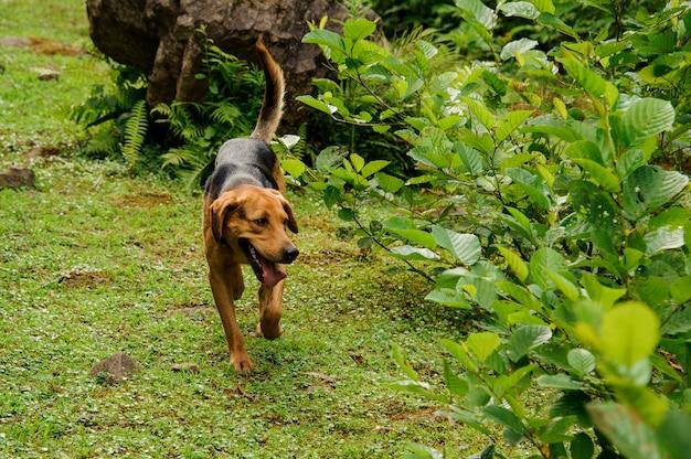 Filhote de cachorro preto e marrom, brincando na floresta