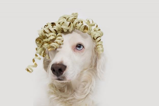 Filhote de cachorro que comemora o aniversário, o carnaval ou o ano novo com uma fita dourada.