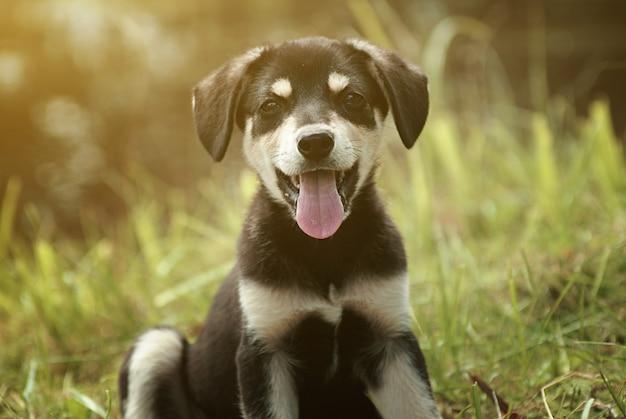 Filhote de cachorro sorridente fofo