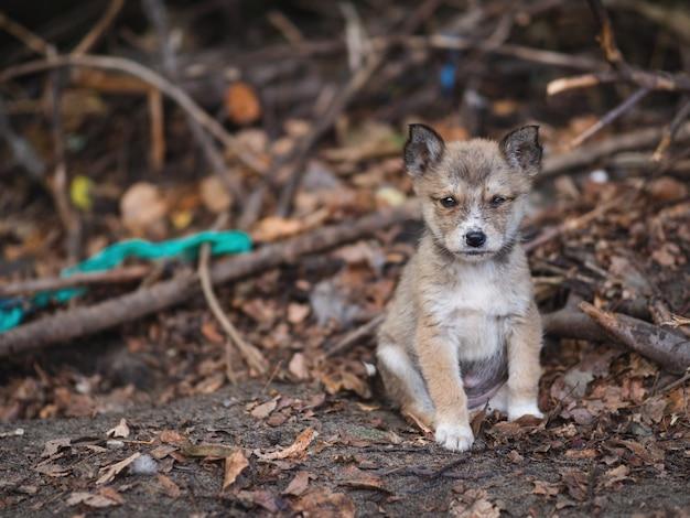 Filhote de cachorro sujo insalubre na rua frio no outono