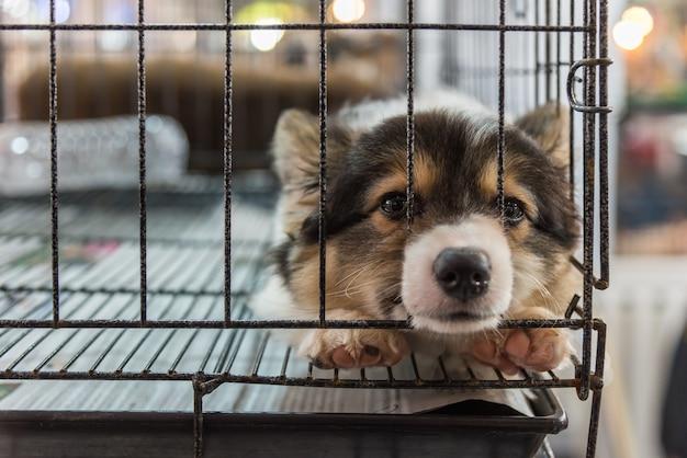 Filhote de cachorro tão fofo dormindo sozinho em gaiola com tristeza e solidão