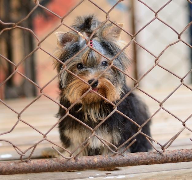 Filhote de cachorro trancado na gaiola