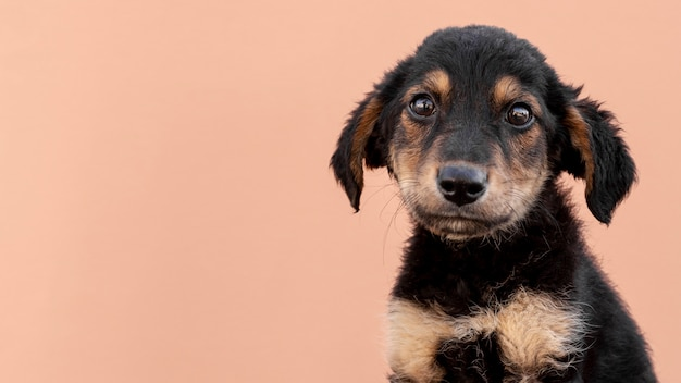 Filhote de cachorro triste com cópia-espaço