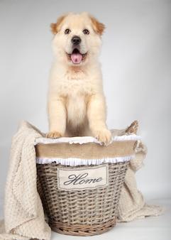 Filhote de cachorro vira-lata dentro de uma cesta