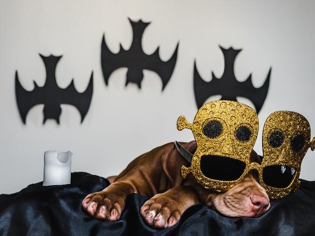 Filhote de pit bull encantador, deitado em um tapete preto e vestido para o halloween