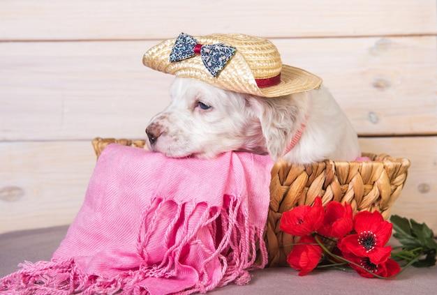 Filhote de setter inglês em uma cesta de madeira com flores