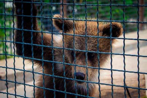 Filhote de urso em uma gaiola