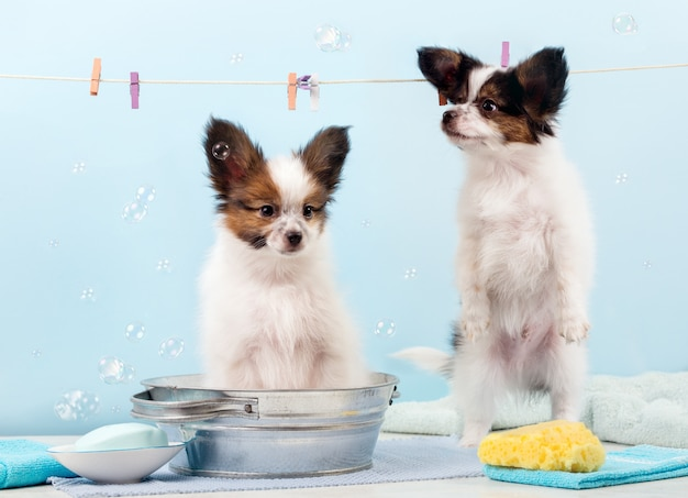 Filhotes de banho