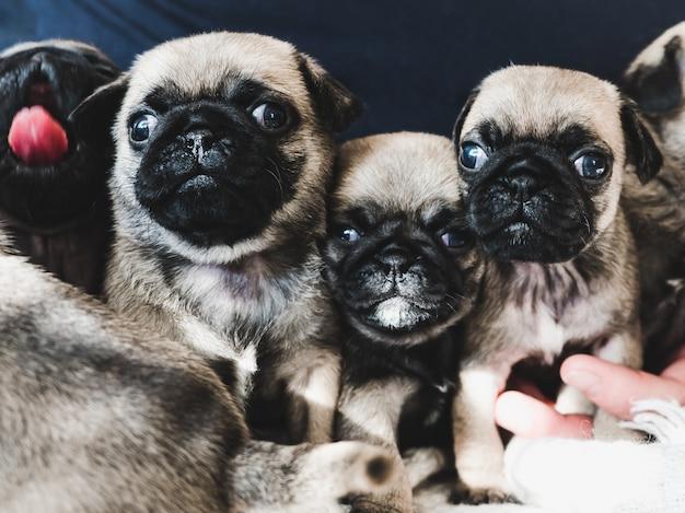 Filhotes de cachorro bonitos, doces em um cobertor no fundo da luz solar