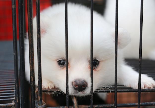 Filhotes de cachorro dentro de uma gaiola em exposição para venda