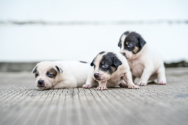 Filhotes de cachorro dispersos que encontram-se na rua