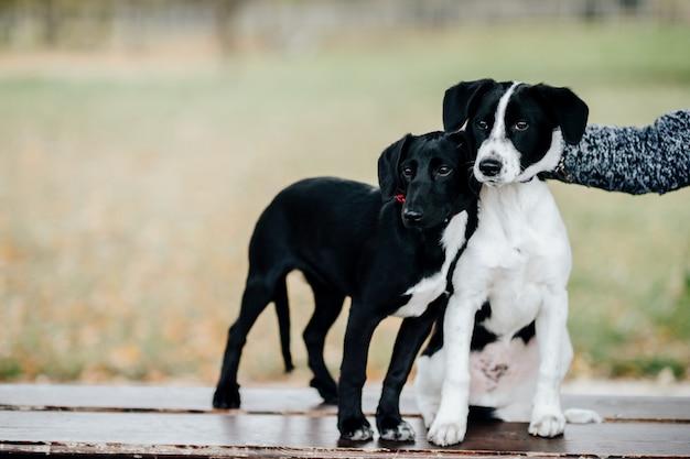 Filhotes de cachorro felizes pequenos que estão no banco ao ar livre.