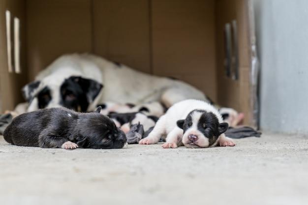 Filhotes de cachorro sem teto dormem perto da mãe