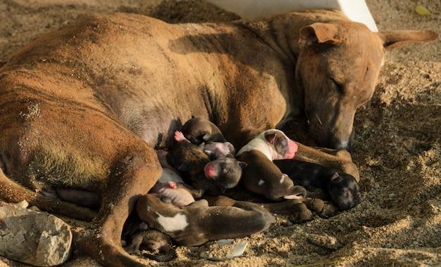 Filhotes de cachorro vadios amamentando