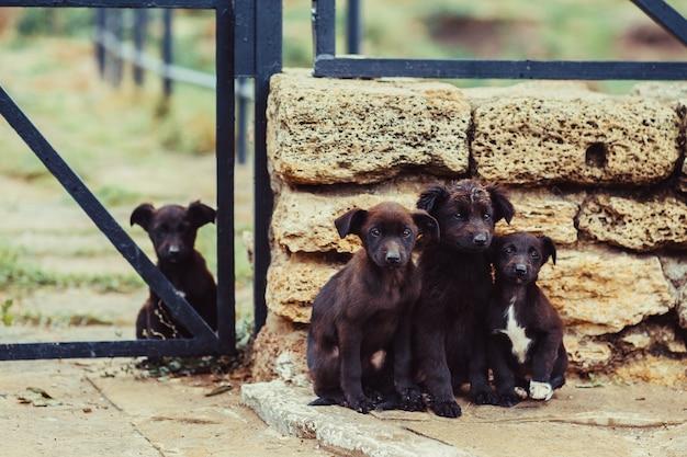 Filhotes marrons vadios perto da parede