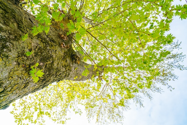 Filial de árvores bonita no céu azul.