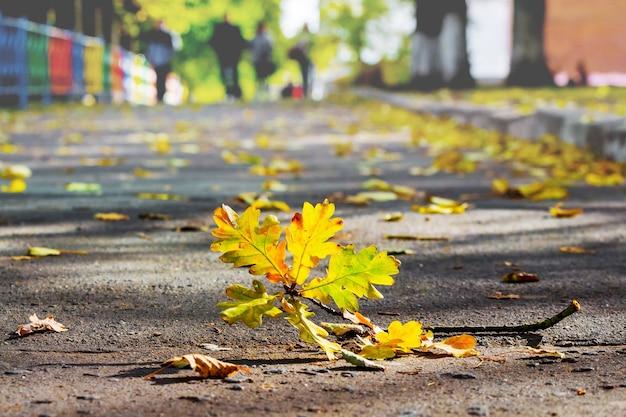 Filial de carvalho com folhas coloridas de outono no caminho de asfalto do parque da cidade