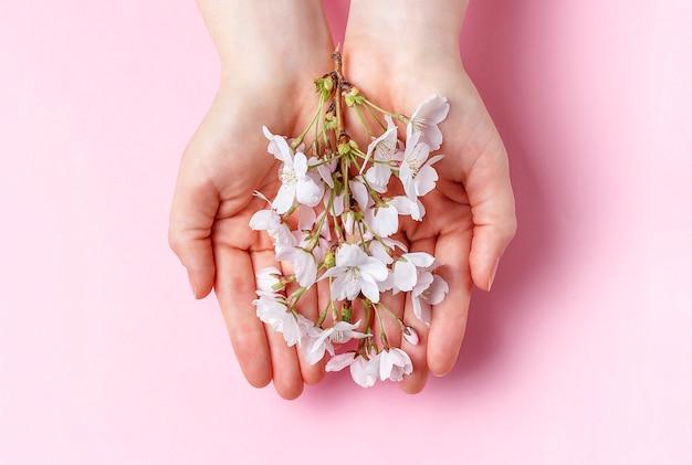 Filial de sakura nas palmas das mãos femininas em um fundo rosa