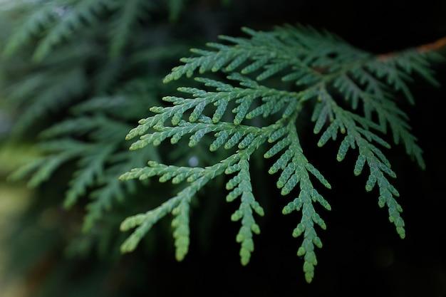 Filial de uma planta verde. plano de fundo ou textura. foco seletivo. a foto é sobreposta com areia e ruído.
