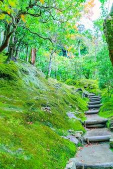 Filial floresta enevoada caminhada rússia