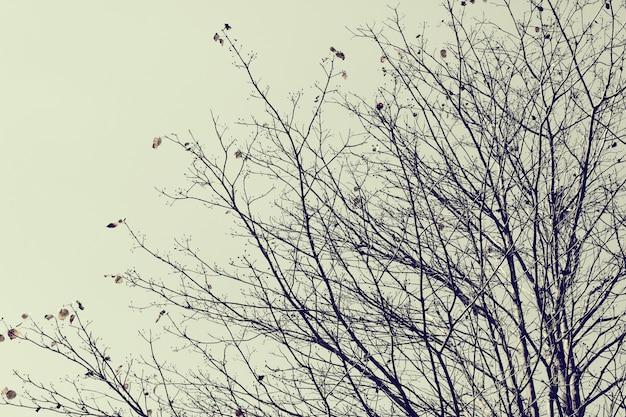 Filial seca de uma árvore no inverno.