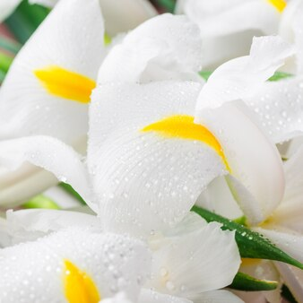 Fim, cima, bonito, branca, íris, flores