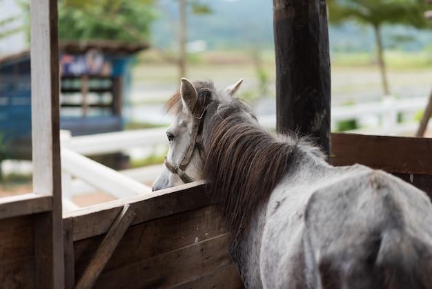 Fim, cima, cavalo, gaiola, jardim zoológico