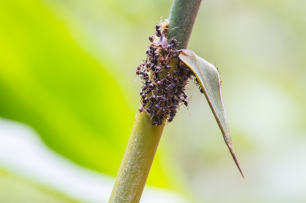 Fim, cima, formigas, planta