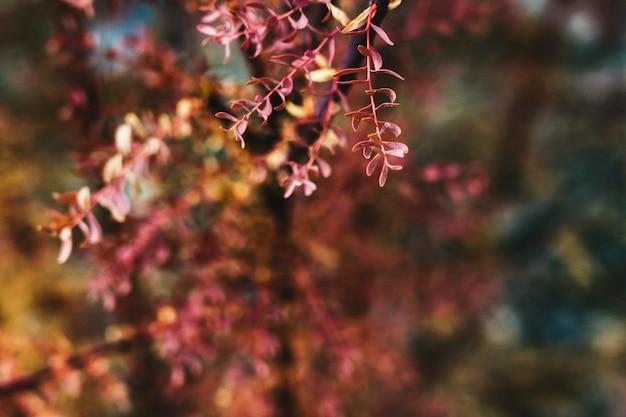 Fim, cima, outono, vermelho, árvore, folhas