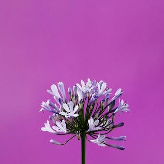 Fim, cima, roxo, flores