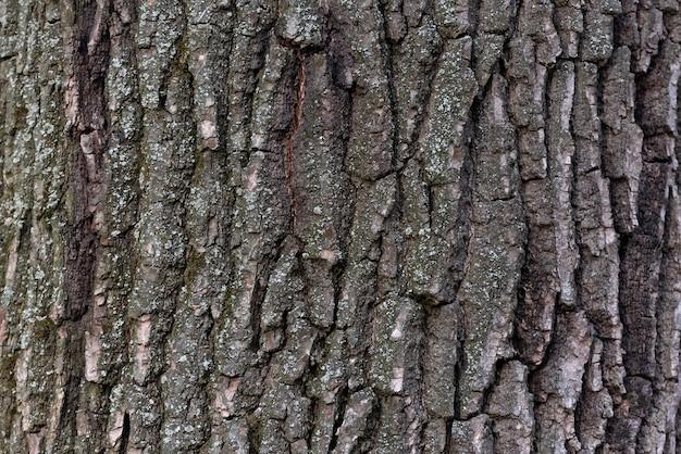 Fim da casca de árvore acima. espaço abstrato. superfície texturizada áspera