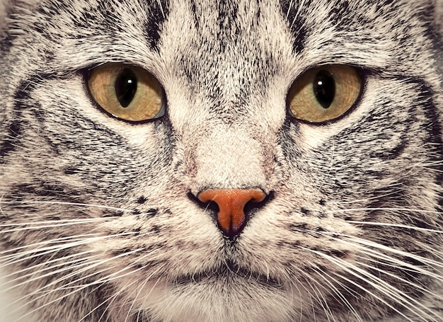 Fim da face do gato