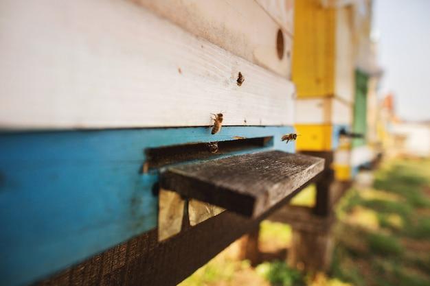 Fim do detalhe da colmeia da abelha acima.