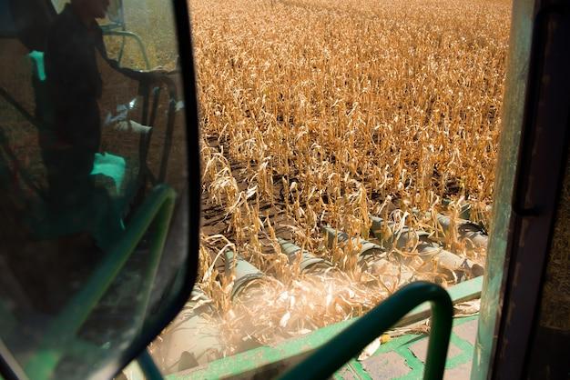 Fim do verão, começou a colheita do milho.